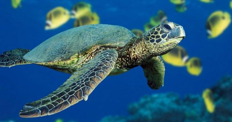 """Viaggio di una Tartaruga: la Fondazione Cetacea continua la rassegna """"Incontri con il Mare"""""""