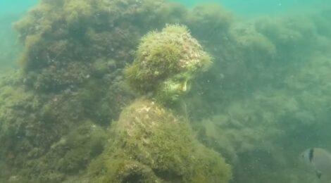 Archeologia subacquea: corso proposto da UISP, GCA e Circolo Subacqueo Ravennate
